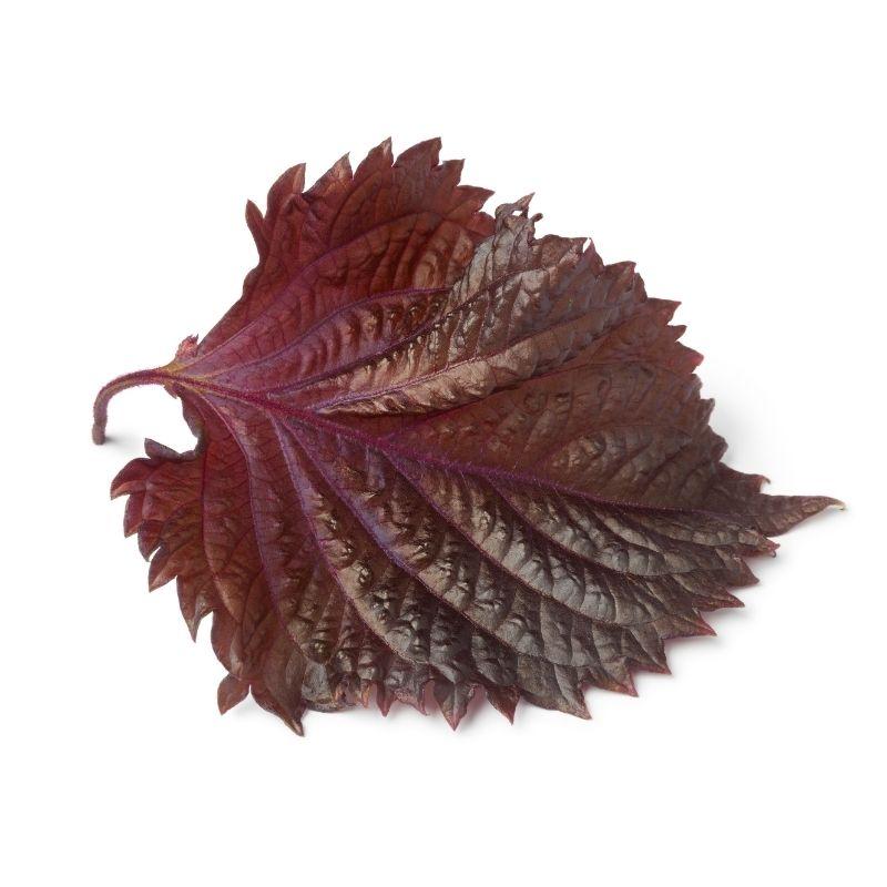 Shiso leaves purple