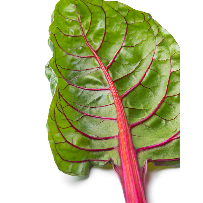 swiss chard red