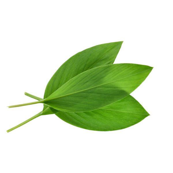 Buy best online turmeric leaves in dubai and UAE